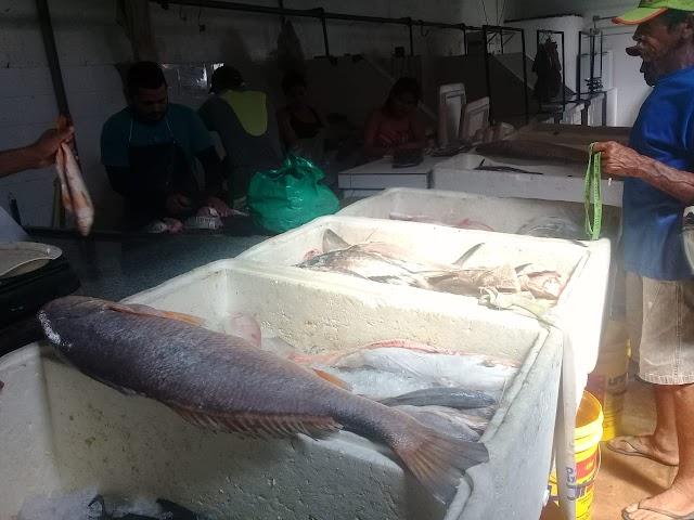 Pescado com preços variados é a grande procura da Semana Santa em Ourém