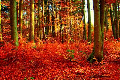 Herbst, autumn, autunno, осень, otoño, automne, mùa thu, 秋, Hösten, восень, vjeshtë, payız, Udazkeneko, jesen, есен, efteråret, sügis, syksy, 가을, φθινόπωρο,