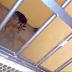 Animal de alcalde en Oaxaca ordena encerrar y dejar morir de hambre a un perro