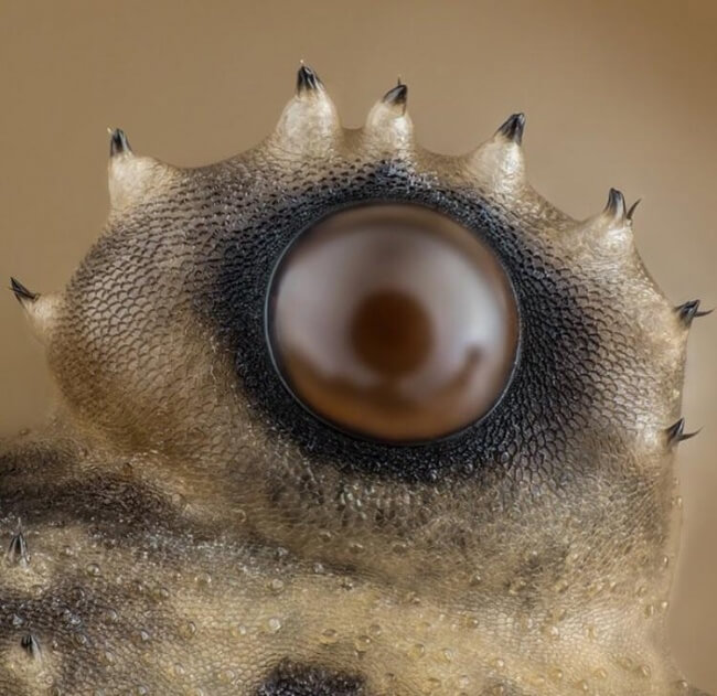 22 Breathtaking Images Of Things You've Never Seen Before - A spider's eye under a microscope