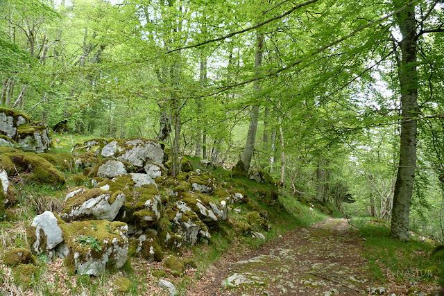 Hayedo del Río Infierno - Asturias