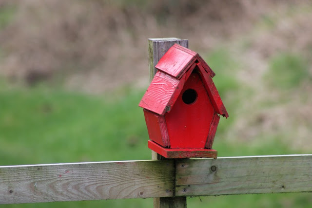 Red Bird Box Derryounce