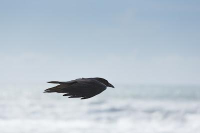 czarny ptak, niebo, światło, totemizm, religie, szamanizm, totem, rodzima wiara