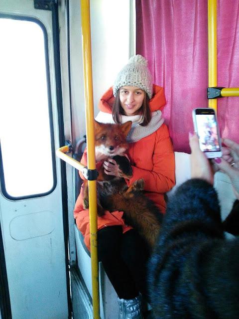 Необычный пассажир: в уфимской маршрутке ехала лиса