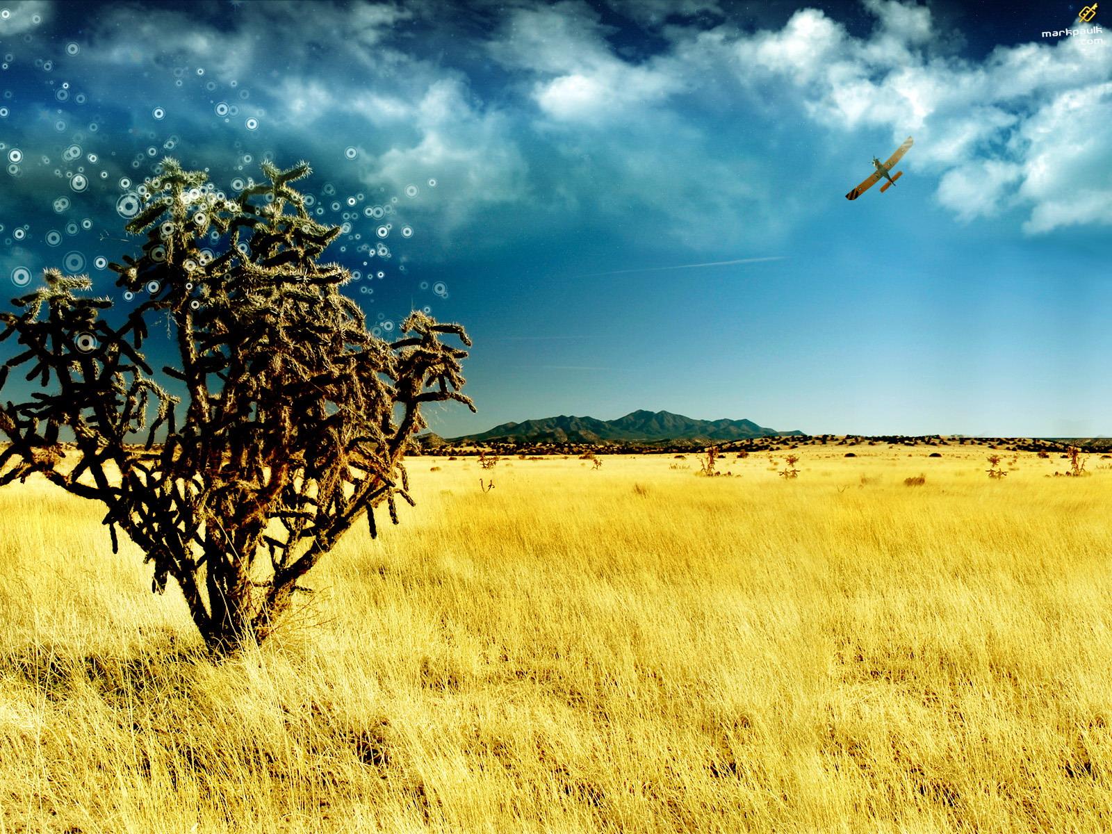 tree desktop background - photo #33