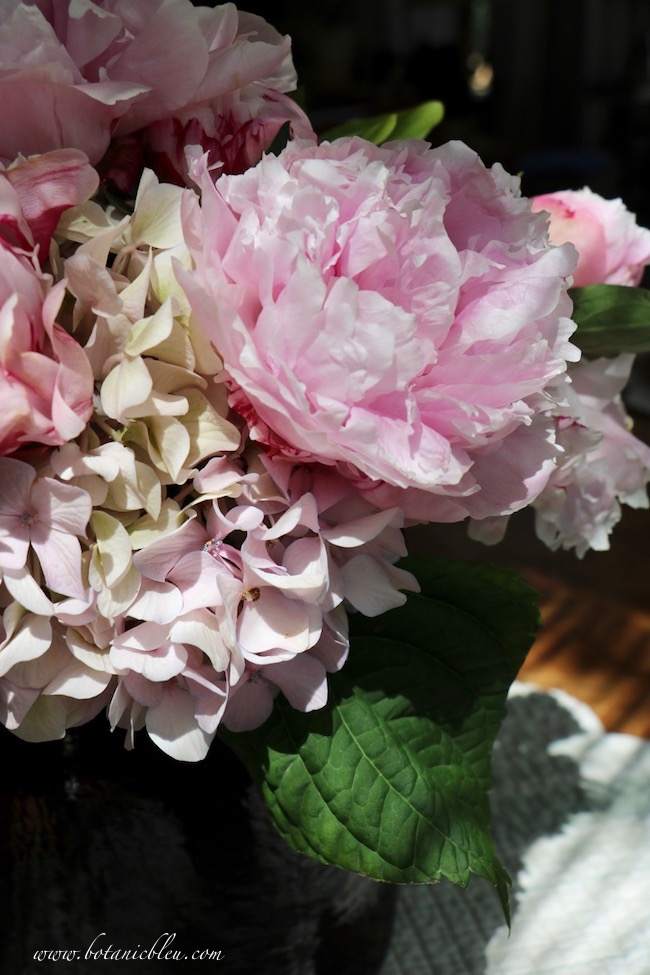 Under the beautiful peony flower spell for generations