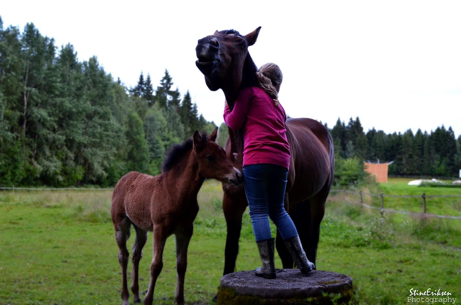 the last wild a real horse hug. Black Bedroom Furniture Sets. Home Design Ideas