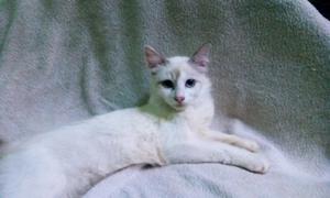 Photoshoot Kucing Cantik