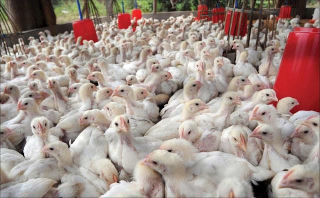 تحسين الانتاج الحيواني بالتأثير على تكاثرها