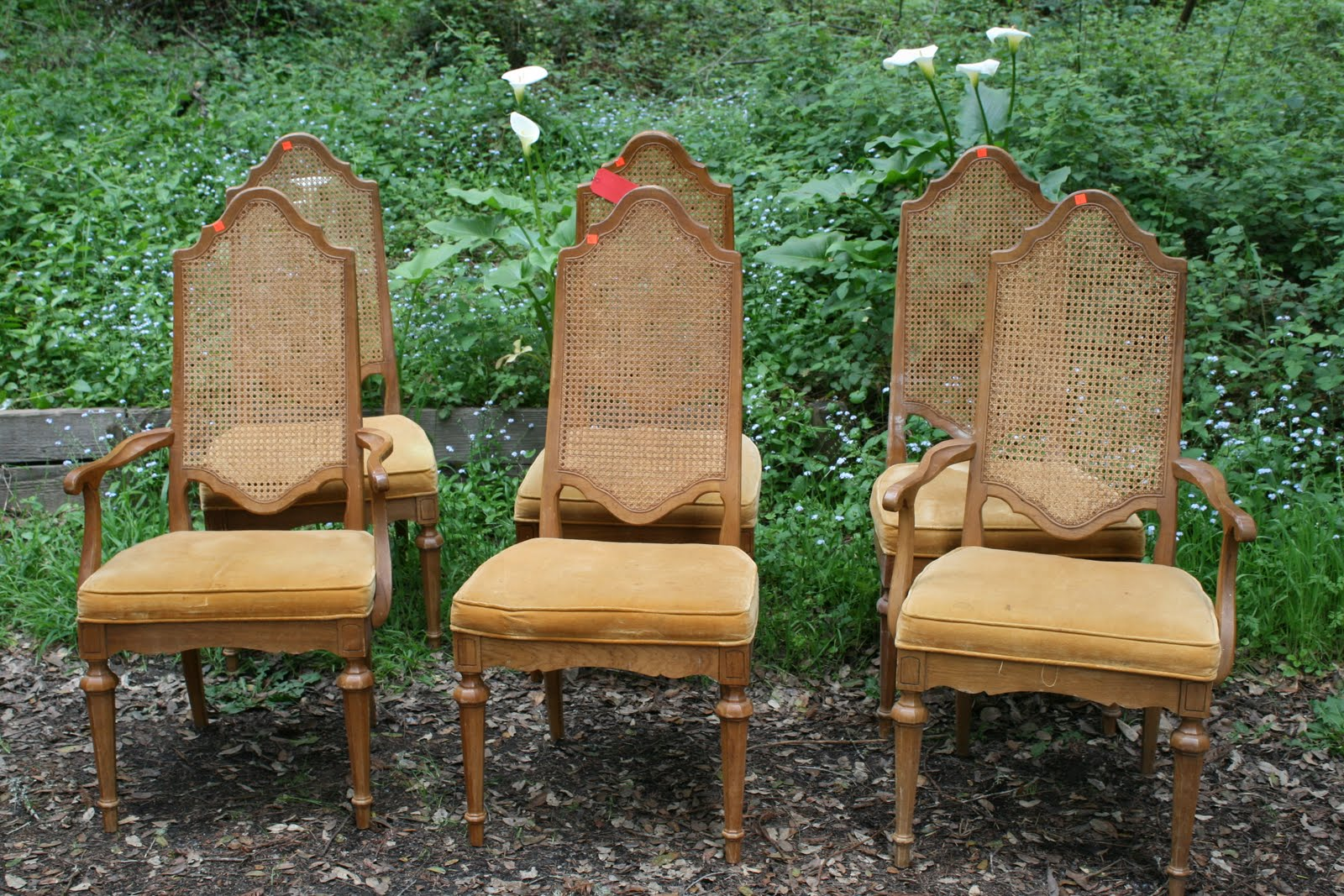 Find Of The Week Vintage Cane Back Chairs