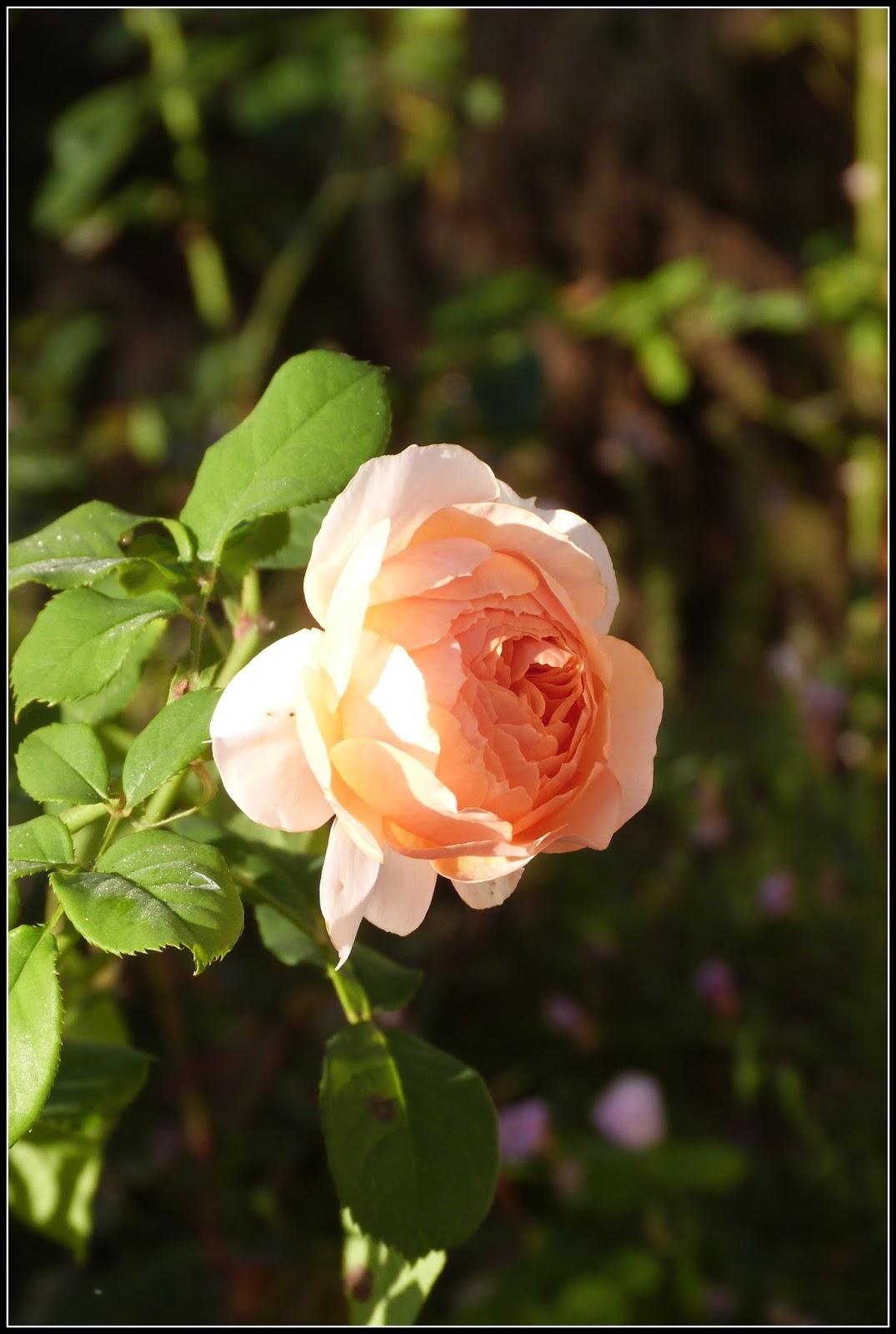 Un jardin des fleurs xavier de fraissinette au petit for Jardin xavier