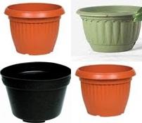 Pot Adenium