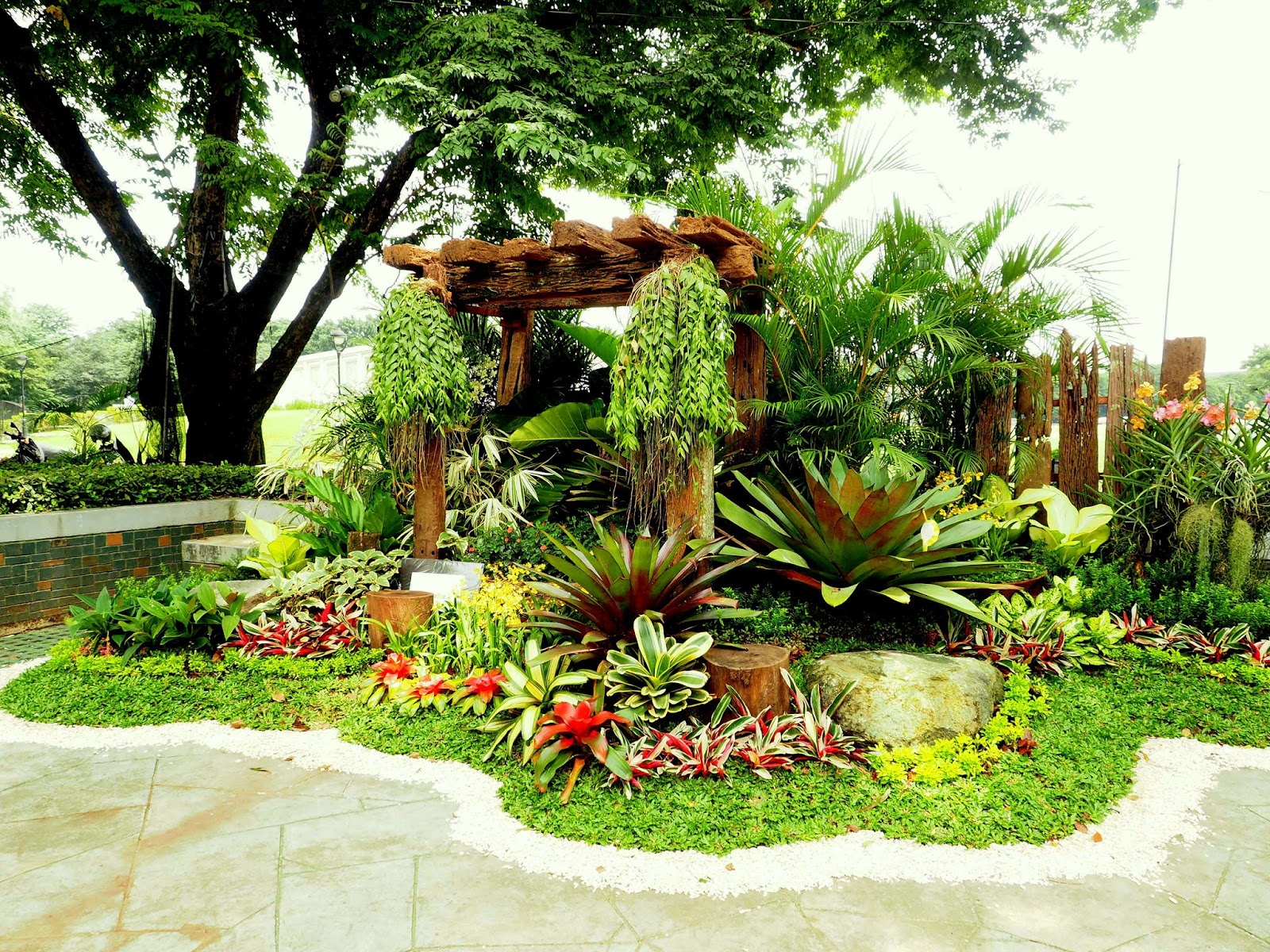 Andrea 39 s plants photos and travels philippines orchid for House garden design in philippines