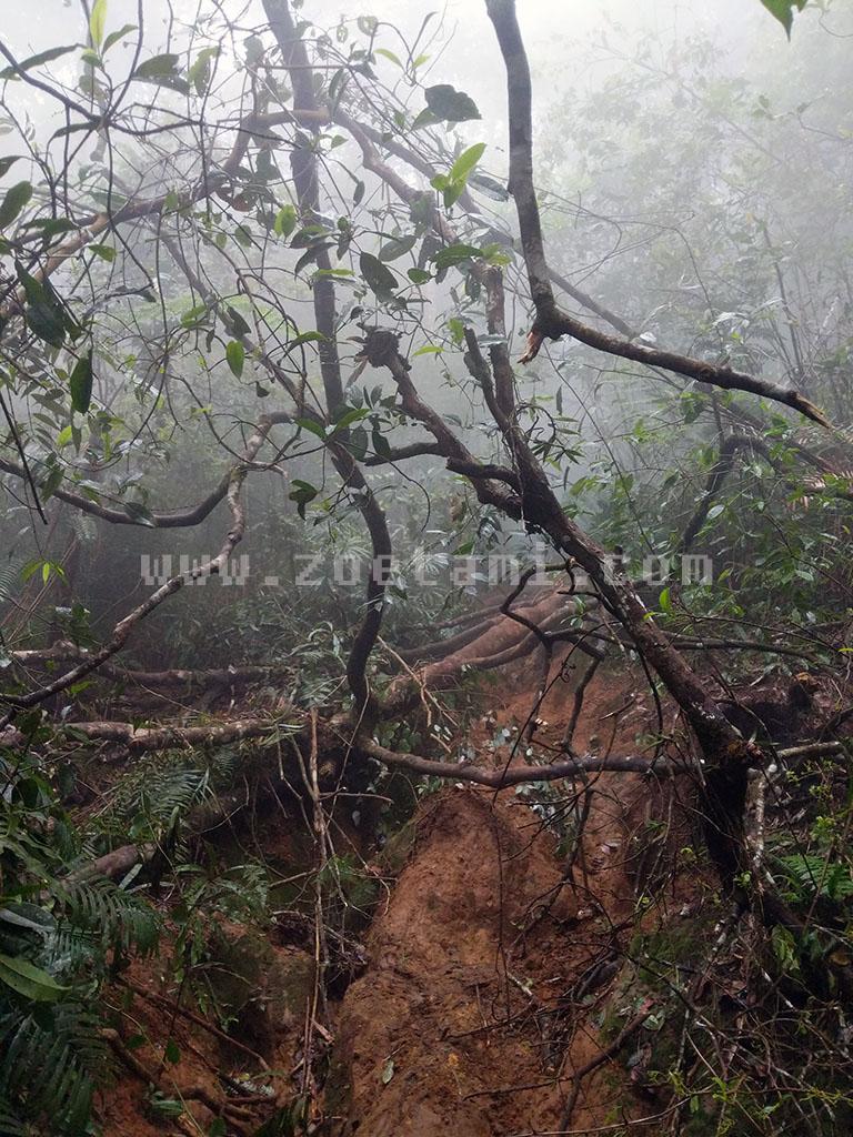 Gambaran Trek ke Gunung Salak via Cimelati