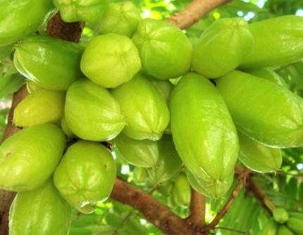Image result for Belimbing Wuluh site:blogspot.com