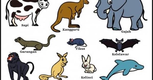60 Gambar Sistem Ekskresi Pada Hewan Mamalia Terbaik