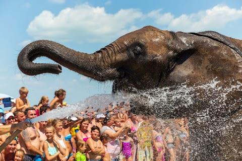 Elefántokat fürdettek a Balaton vizében a Cirkuszok éjszakája nyitányán