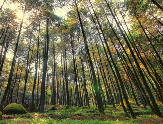 Hutan Hujan Iklim Sedang
