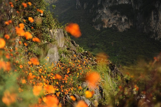 Enjoy wild daisy flowers in Ha Giang – a new experience to Northeast Vietnam Travel 1