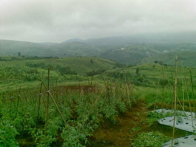 Foto(5208) Jual Tanah Milik | Kebun 23 Ha, Lokasi Puncak jual tanah di puncak