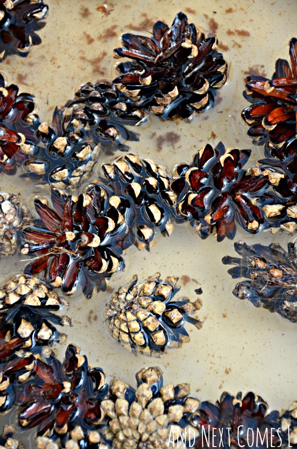 Close up of pinecones in a cinnamon scented water sensory bin for toddlers and preschoolers from And Next Comes L