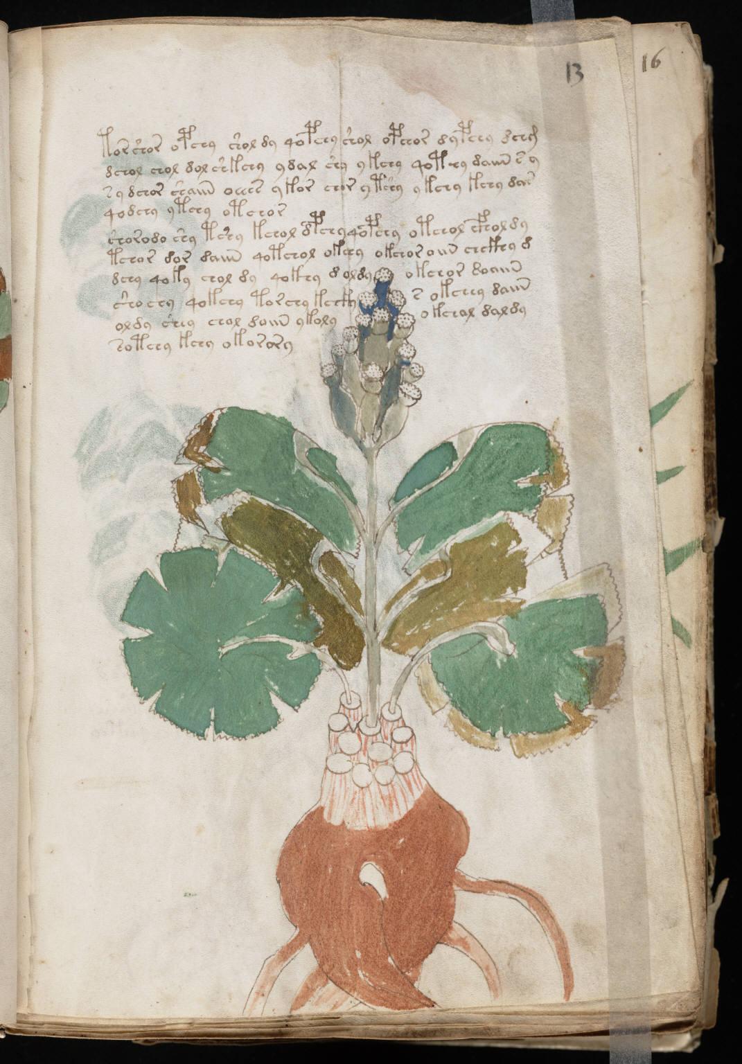 manuscrito025