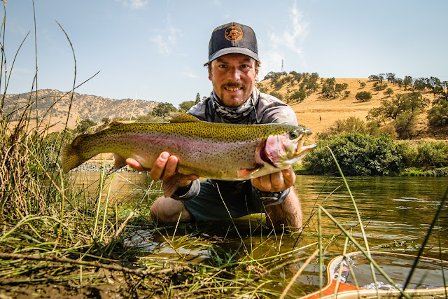 Freshwater Rainbow Trout