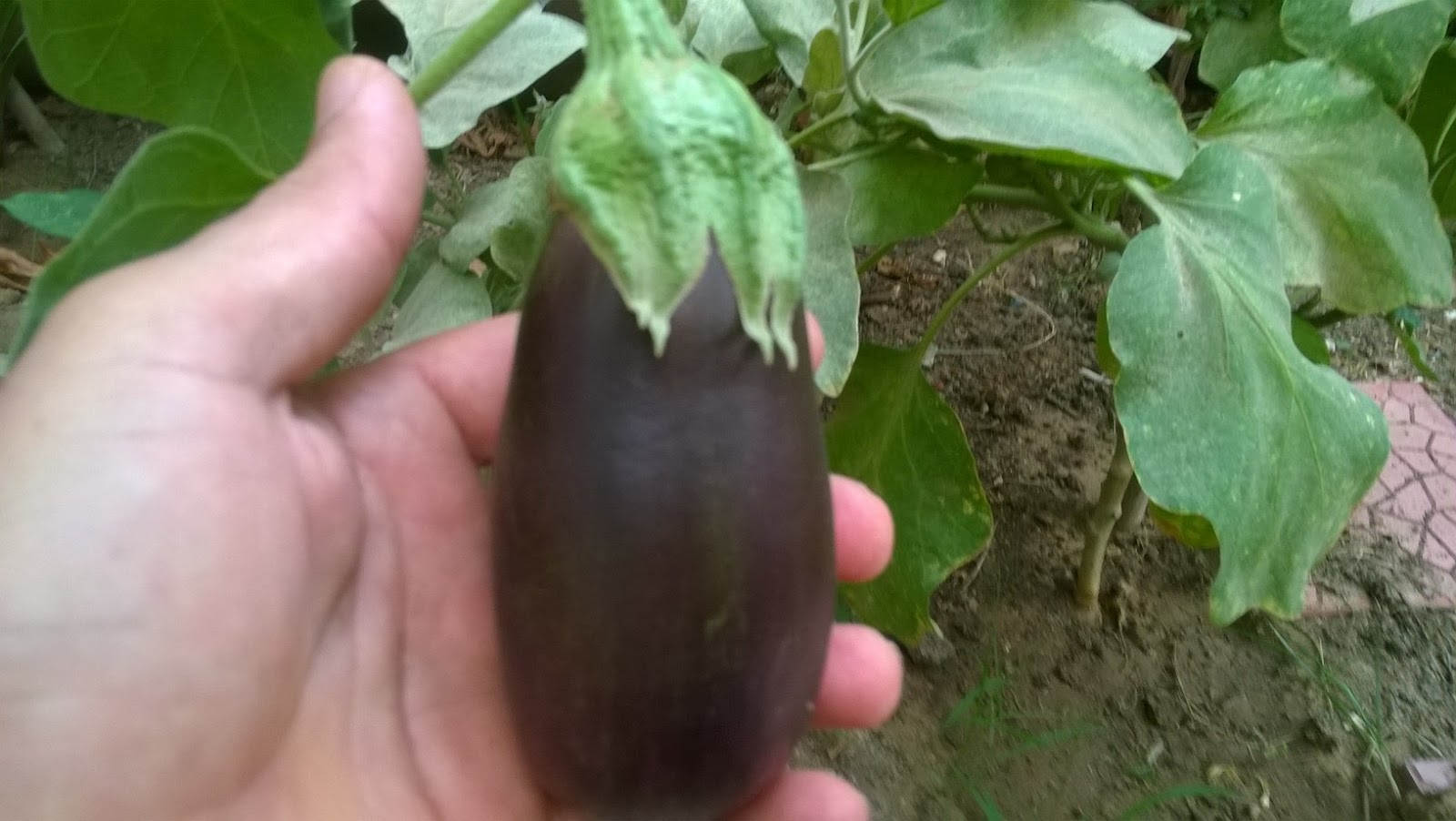how to cut an eggplant what to do with seeds