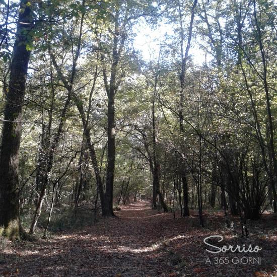 sorrisoa365giorni camminare boschi