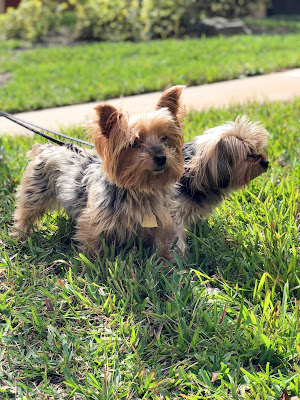 Miami Springs, Dog day care and dog sitters for long and short term boarding.