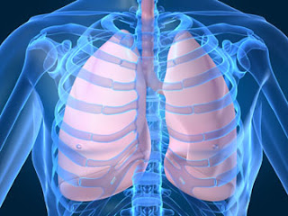 Harvard Scientist Says Improved Treatment Coming for COPD