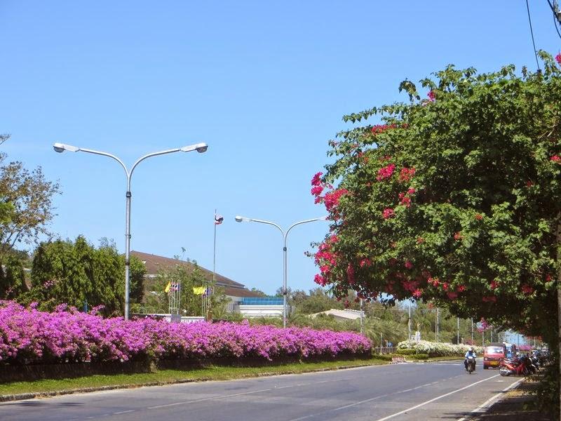 Красные цветы Таиланд