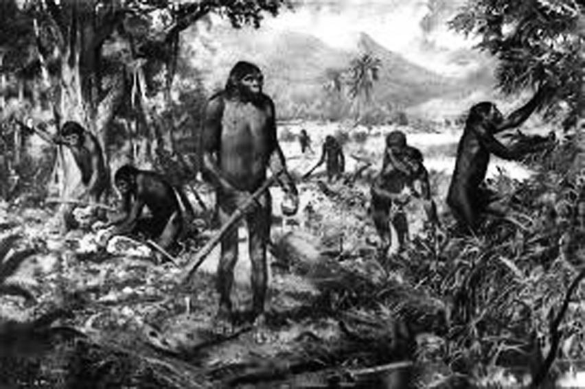 Gambar ilustrasi 3 jenis Pithecanthropus