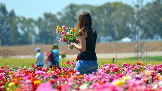Vrouw plukt bloemen.