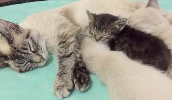 Kitten Orphaned Since He Was Born Now Wouldn't Let Go Of His 2 New Mamas