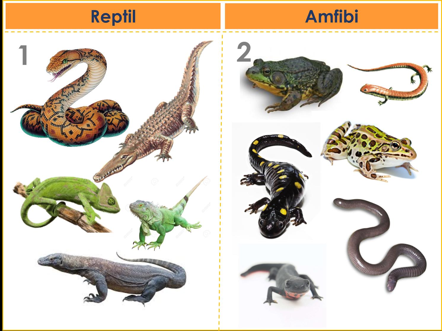 Reptil sebagai peliharaan  why nott
