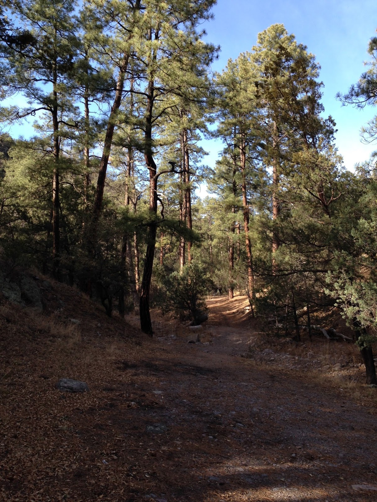 Southern New Mexico Explorer: Lower Gallinas Campground ...