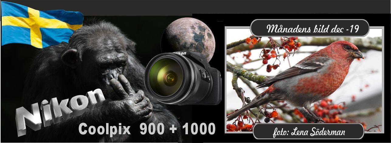 Coolpix 900-1000 (facebook)