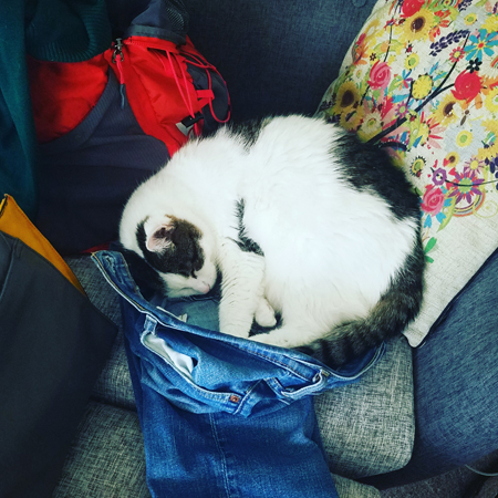 image of Olivia the White Farm Cat curled up in a pair of Iain's jeans, which are sitting on a grey chair