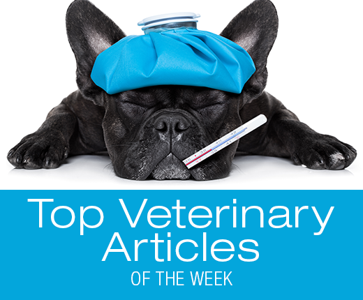 Top Veterinary Articles of the Week: Fever, Sago Palm Toxicity, and more ...