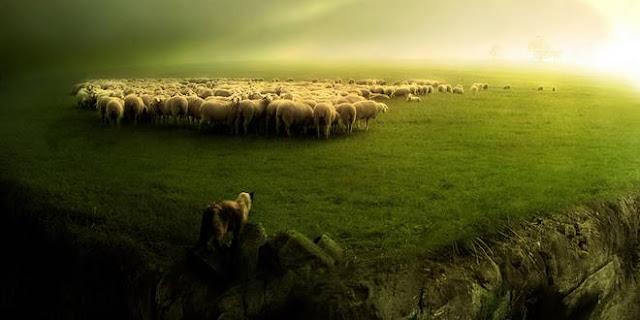 Γιατί σιωπούν τα πρόβατα;