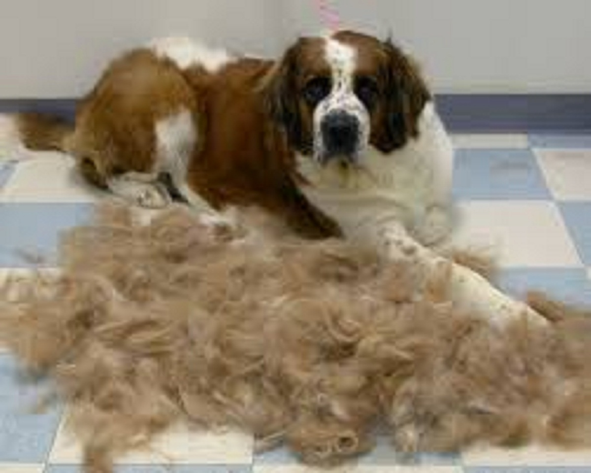 All You Need To Know About Dog Shedding Doglopedix