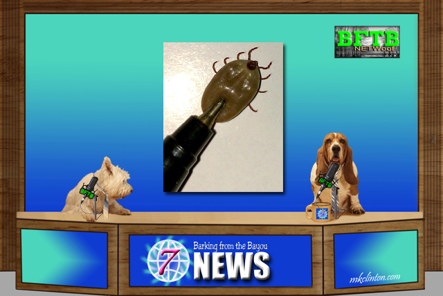 BFTB NETWoof News with two dogs anchoring