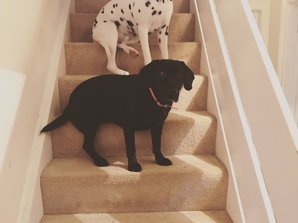 The best Dog friendly cottage the lake district