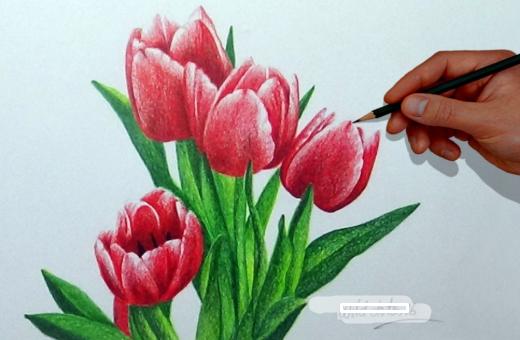 Contoh Gambar Bunga Tulip Mosaicone