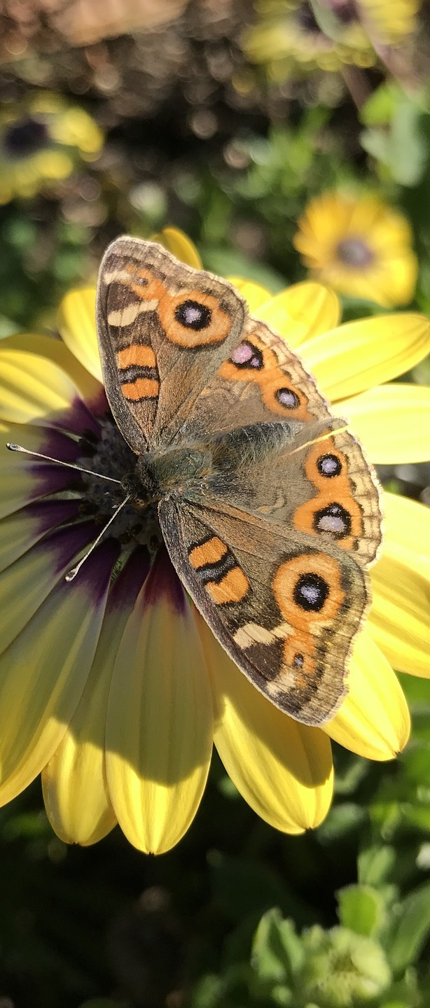 A beautiful butterfly on a yellow flower.