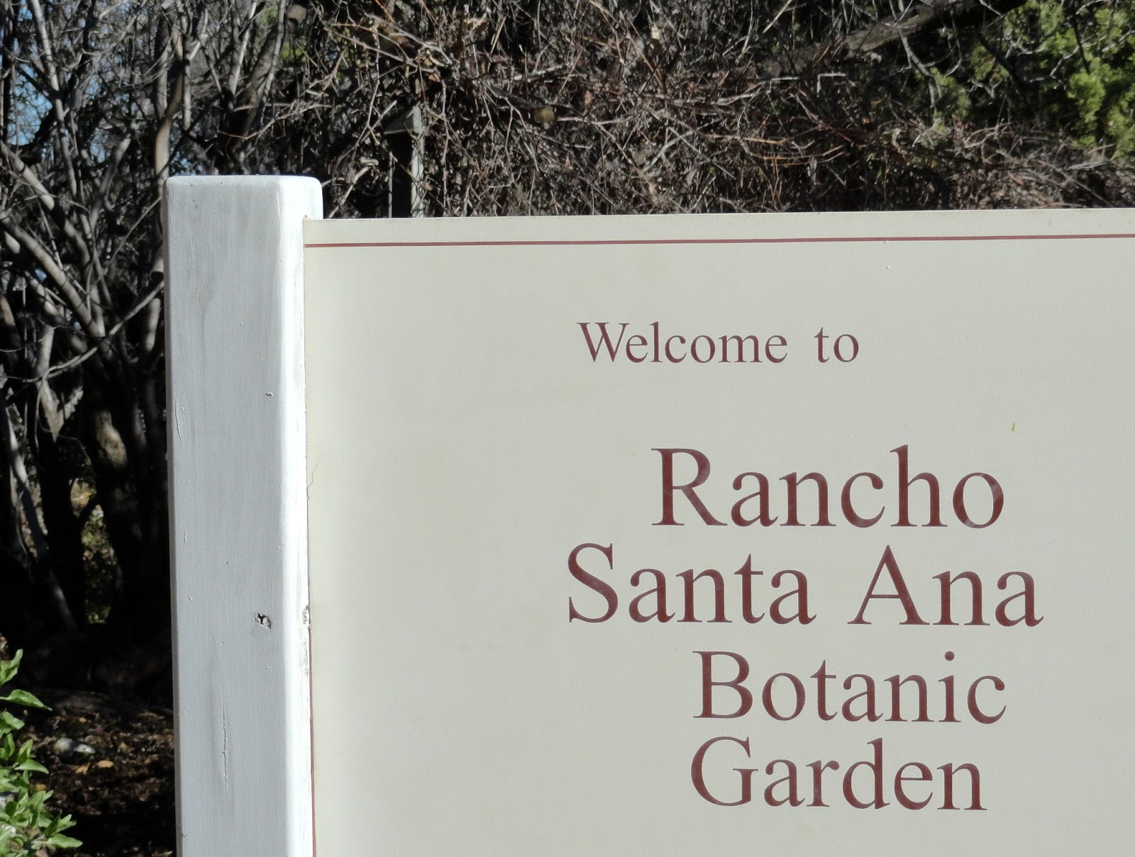 ... On Piece Of Eden And Remembering I Was There At About This Time Last  Year) I Guess Itu0027s Time I Finally Write About The Rancho Santa Ana Botanic  Garden.