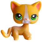 Littlest Pet Shop Small Playset Cat Shorthair (#72) Pet