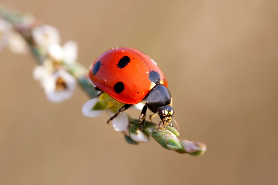 20. Like a ladybird on the wire