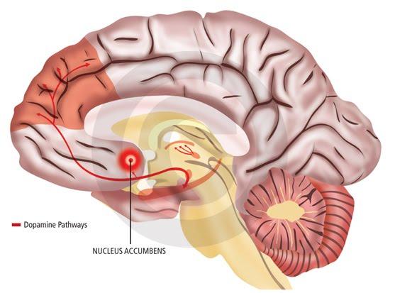 Vta Gehirn